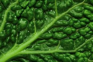 savoy-cabbage-chlorophyll-small