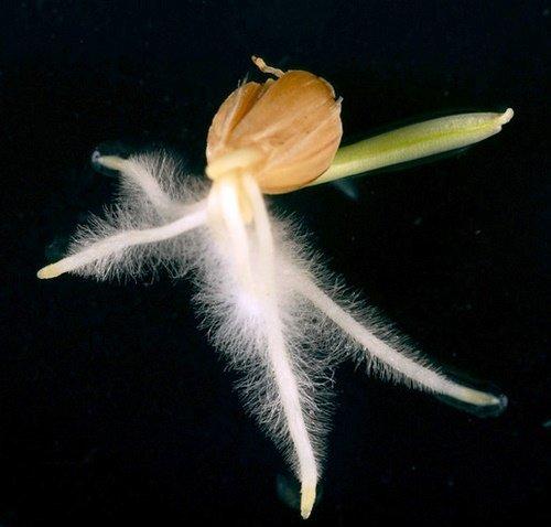 проращивание зерна