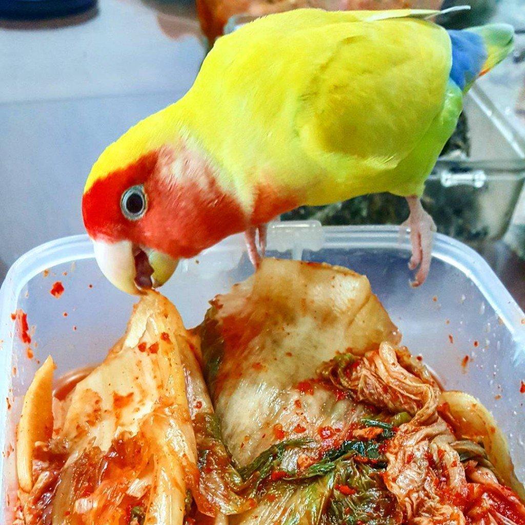 кимчи +из пекинской капусты, кимчи рецепт +с фото,кимчи капуста +по корейски рецепт, приготовить кимчу, +как приготовить кимчи, рецепт кимчи +из пекинской, рецепт кимчи +из пекинской капусты, домашняя кимчи, кимчи +по корейски фото,  кимчи +в домашних условиях, приготовление кимчи, кимчи +по корейски +из пекинской,
