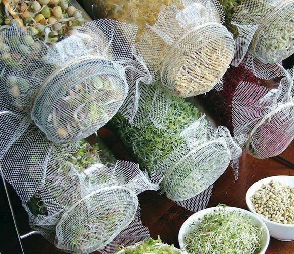 микрозелень +в домашних условиях,выращивание микрозелени,какую зелень выращивать, молодая зелень, бутенко зелень +для жизни, ранняя зелень, как вырастить зелень +в квартире, как вырасти зелень +в квартире, какую зелень посадить, как посадить зелень дома, проросток применение. проросток растения, проростки +как употреблять, ростки польза +и вред,